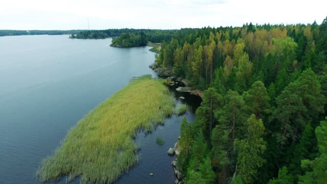 aerial forest view at summer time with good weather - north stock videos and b-roll footage