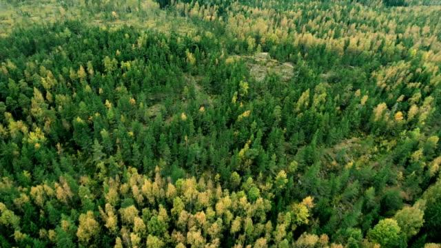 aerial waldblick im sommer bei gutem wetter - finnland stock-videos und b-roll-filmmaterial