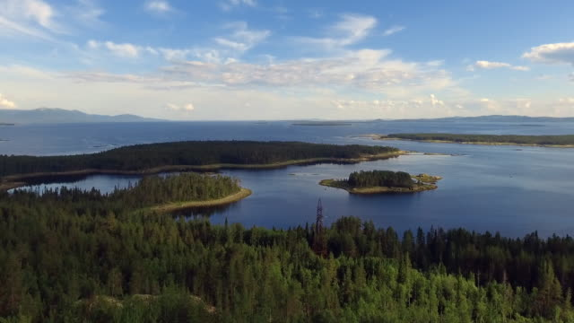 aerial forest view at summer time with good weather - lake stock videos & royalty-free footage
