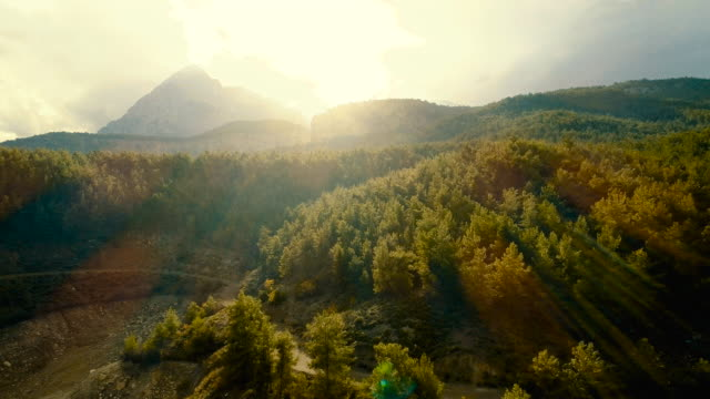 aerial forest view at sunset - turchia video stock e b–roll