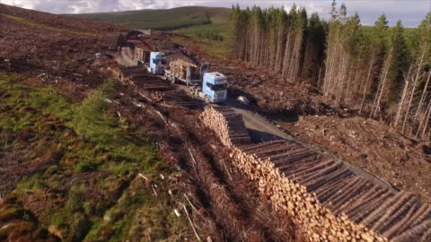 aerial forestry trucks in action - forestry industry stock videos & royalty-free footage