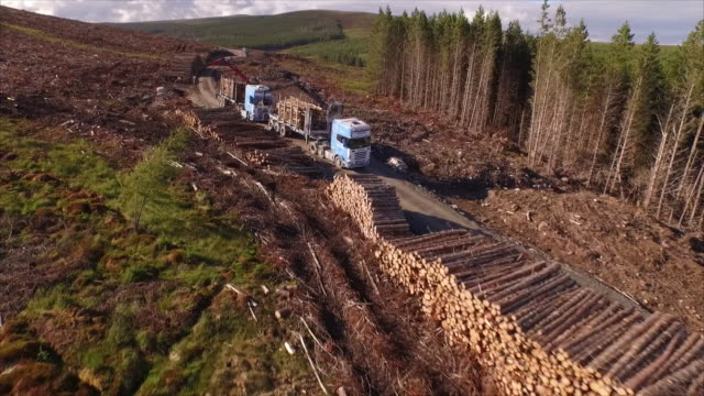 aerial forestry trucks in action - industria forestale video stock e b–roll