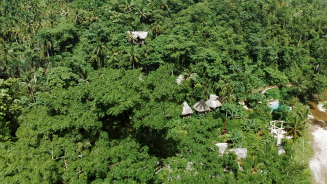 aerial forward: charming tree houses in exotic jungle - hispaniola stock videos & royalty-free footage