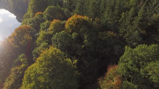 aerial forward: dense autumnal forest with tall pines in the sunshine near lake - perth, scotland - perthshire stock videos & royalty-free footage