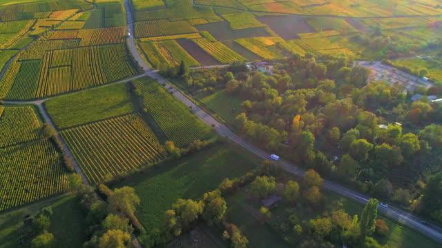 vidéos et rushes de aerial forward: driving slow across the magnificent fields of riquewihr france - quartier résidentiel