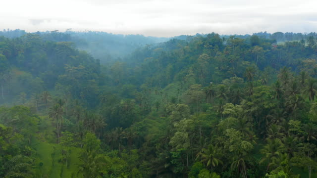 vídeos de stock e filmes b-roll de aerial forward: foggy, thick, green forest with a cloudy sky overhead - jatiluwih rice terrace, bali - nublado