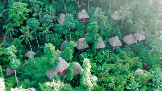 aerial forward: lovely tree houses in lush green jungle - hispaniola stock videos & royalty-free footage