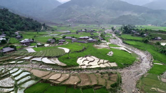 aerial forward: rice terraces in vietnam with water and prepared for harvesting - vietnam video stock e b–roll