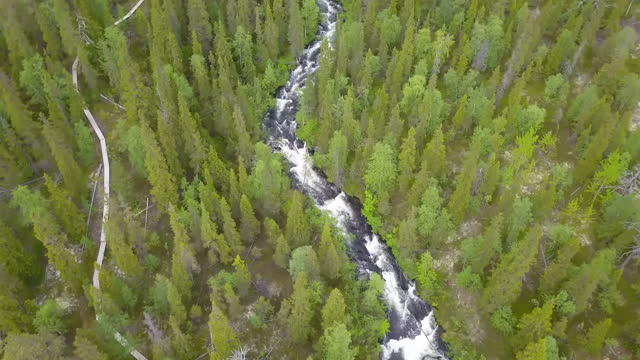 aerial forward: river stream by boardwalk amidst trees in forest - lapland nature reserve, russia - nature reserve stock videos & royalty-free footage