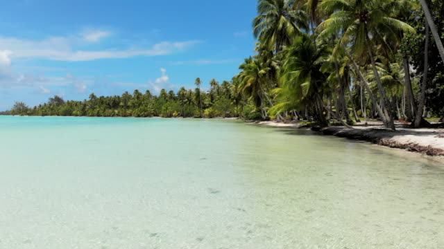 aerial forward: shallow tropical ocean by palm tree beach in vahine, french polynesia - tropical tree stock videos & royalty-free footage