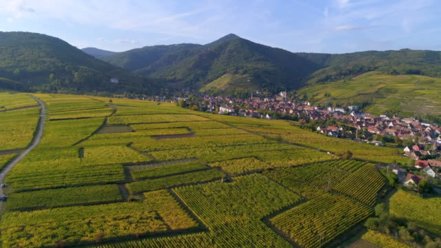 vidéos et rushes de aerial forward slow: beautiful fields and high mountains of riquewihr france with village at the middle - drone