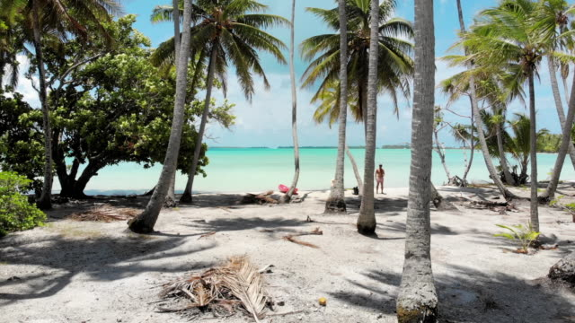 aerial forward: sunny, palm covered beach by tropical ocean in vahine, french polynesia - tropical tree stock videos & royalty-free footage