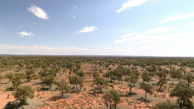 aerial forward: trees and bushes spread out on large dirt plain with blue sky - uluru, australia - エアーズロック点の映像素材/bロール