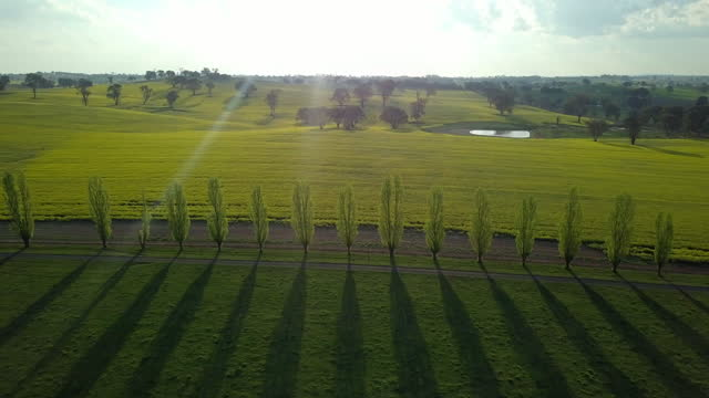 aerial forward: trees on green agricultural landscape against sky - canowindra, australia - crucifers stock videos & royalty-free footage