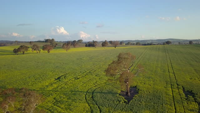 aerial forward: trees on green rural landscape against sky - canowindra, australia - crucifers stock videos & royalty-free footage