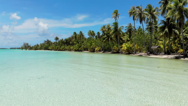 aerial forward: tropical ocean by palm tree beach in vahine, french polynesia - tropical tree stock videos & royalty-free footage