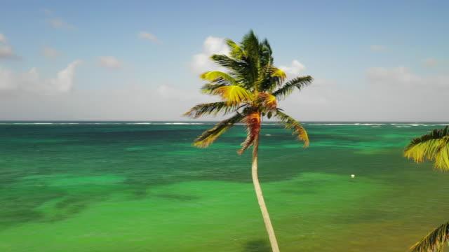 aerial forward/left: palm trees swaying in breeze by ocean on sunny day - little corn island, nicaragua - nicaragua stock videos & royalty-free footage