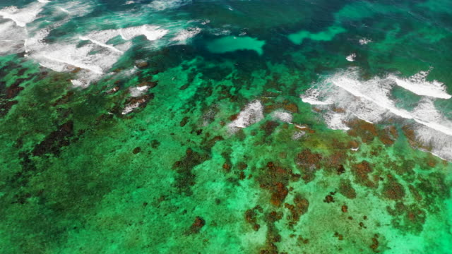 aerial forward/pan down: bright green ocean water by rocky shallows of ocean - little corn island, nicaragua - coral stock videos & royalty-free footage