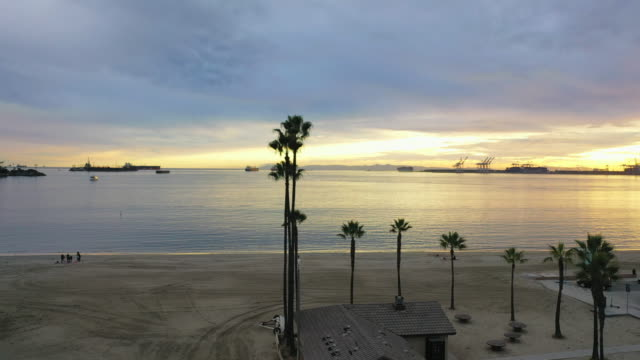 aerial forward/spin right: palm trees and city by ocean at sunset - long beach, california - long beach california stock videos & royalty-free footage