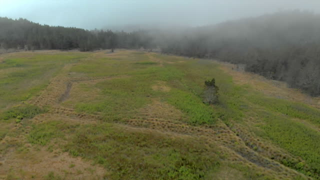 aerial froward: meadow among misty forest under cloudy sky - dominican republic stock videos & royalty-free footage