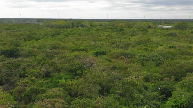 vídeos de stock, filmes e b-roll de aerial: green rural landscape with birds in valladolid, mexico - valladolid, mexico - yucatán