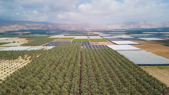 vidéos et rushes de aerial/  greenhouses and date palm plantation in the desert - valley