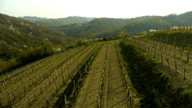 aerial hd: descending over vineyard - cabernet sauvignon grape stock videos and b-roll footage