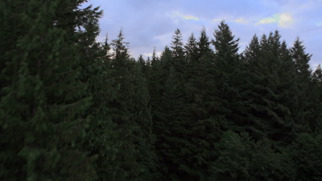 aerial heliocoptor shot of forest tree tops and city below/ vancouver, canada - british columbia stock videos & royalty-free footage