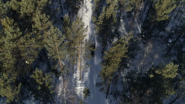aerial: horse cart amidst trees in forest during winter - lake baikal, russia - horse cart stock videos and b-roll footage