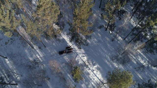 vídeos de stock, filmes e b-roll de aerial: horse drawn on snow covered field in forest - lake baikal, russia - animal de trabalho
