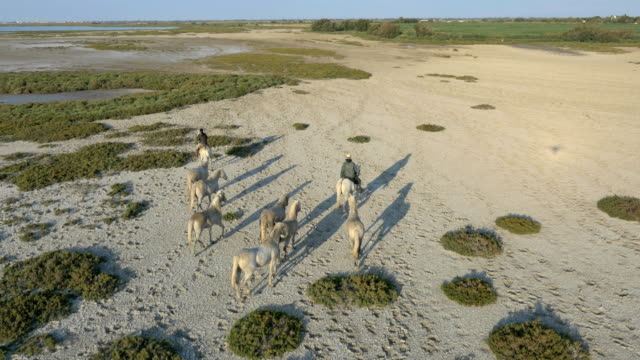 aerial horses camargue outdoors vegetation water travel - galopp gangart von tieren stock-videos und b-roll-filmmaterial