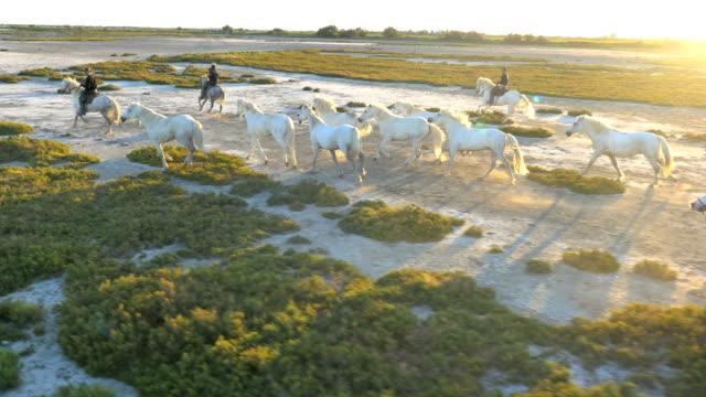 aerial horses wild galloping cowboy sunset camargue - camargue stock-videos und b-roll-filmmaterial