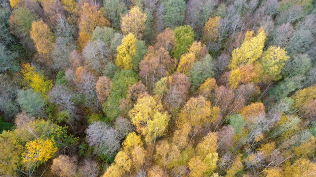 aerial landscape of a forest in sweden - coniferous stock videos & royalty-free footage