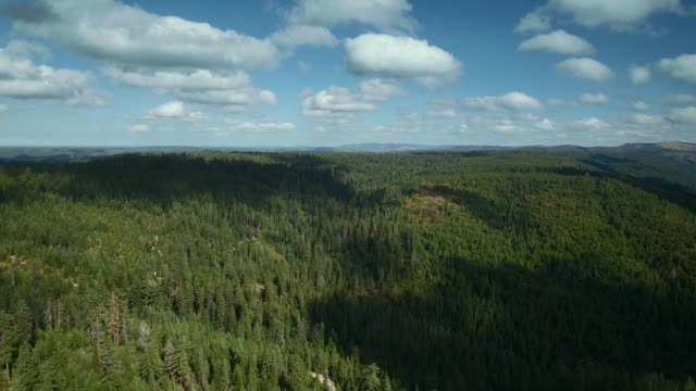 aerial landscape over tahoe national forest - national forest stock videos and b-roll footage