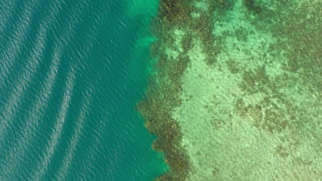 aerial: large reef in a tropical ocean, moorea, french polynesia - insel moorea stock-videos und b-roll-filmmaterial