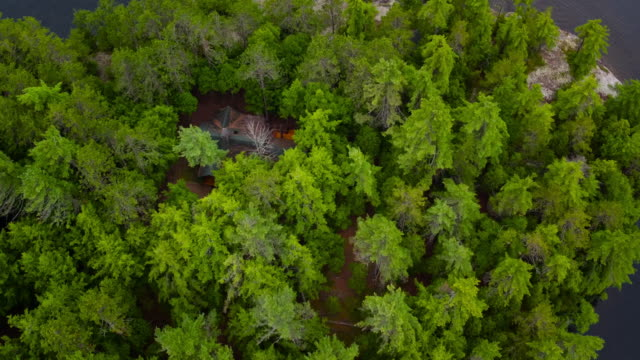 Aerial looking directly down at evergreen trees