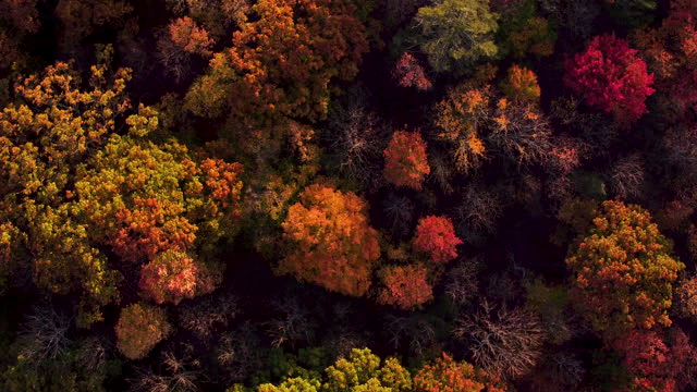 aerial looking directly down on shawangunk mountains in the fall, beautiful leaf colors on trees - ulster county stock videos & royalty-free footage