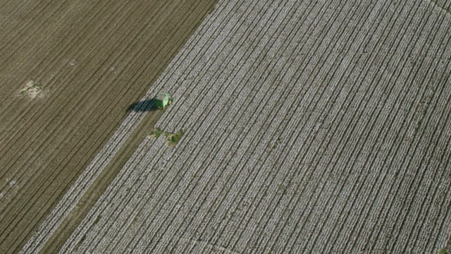 aerial looking down at cotton farm during harvest - cotton plant stock videos and b-roll footage