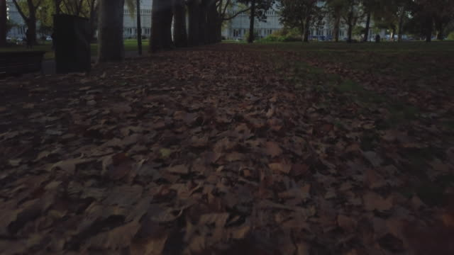 Aerial low angle view of autumn leaves flying at the gardens, Melbourne