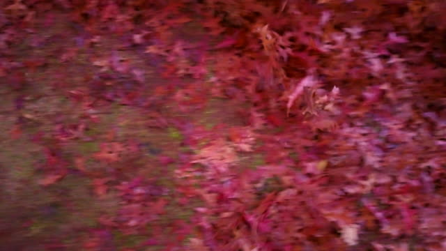 Aerial low angle view of colourful autumn leaves flying