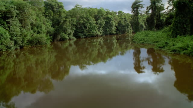 aerial low over bend of river in equatorial forest / french guiana - french guiana stock videos & royalty-free footage