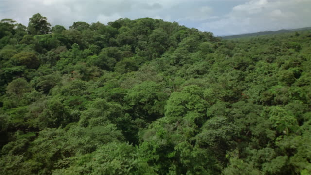 Aerial low over canopy of dense equatorial forest / French Guiana