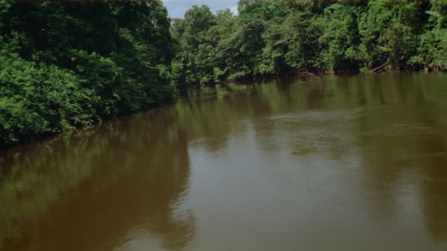 aerial low over river winding through dense equatorial forest/ pulling up over canopy/ french guiana - french guiana stock videos & royalty-free footage