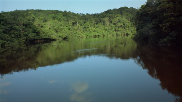 aerial low over river with densely forested banks / over treetops / french guiana - french guiana stock videos & royalty-free footage