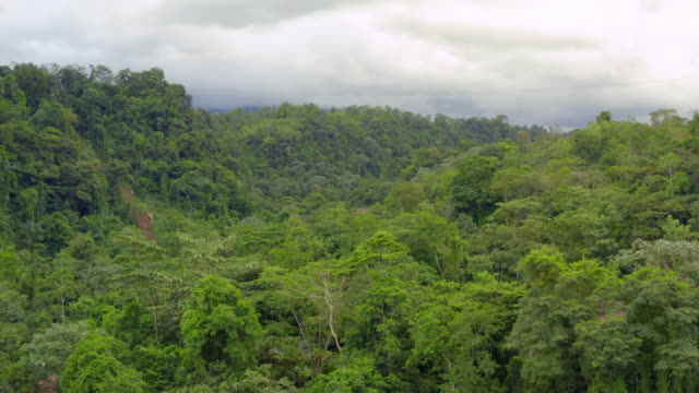 aerial: lush green exotic jungle under cloudy sky - costa rica video stock e b–roll