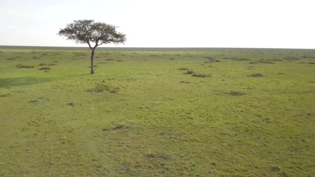 Aerial/ Masai Mara Plains, Kenya