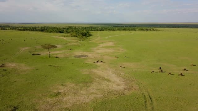 aerial/ masai mara plains, kenya - kenya stock videos & royalty-free footage