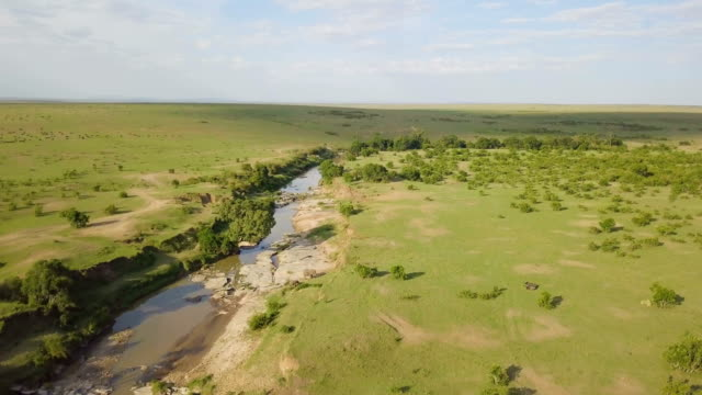 aerial/ masai mara river and plains, kenya - grass area stock videos and b-roll footage