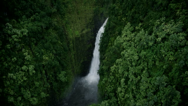 aerial maui, hawaii waterfall; in over forest, then tight & circles waterfall - tropical tree stock videos & royalty-free footage