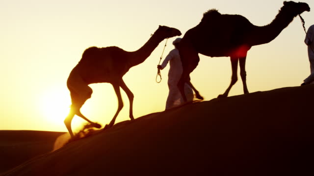 vidéos et rushes de aerial middle eastern male camel owners in desert - dune de sable